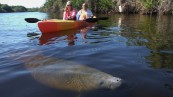 manatee-park-in-fort-myers-florida-5f20a1bb1352ac0c